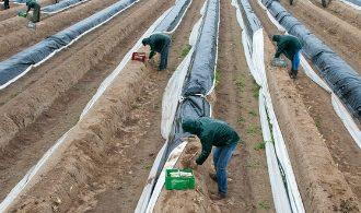 mindestlohn-landwirtschaft-100-_v-img__16__9__xl_-d31c35f8186ebeb80b0cd843a7c267a0e0c81647