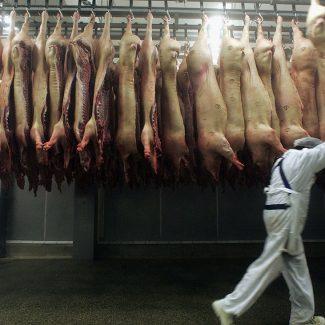 fleischwirtschaft-arbeiter-schlachthof