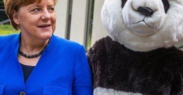 merkel-panda
