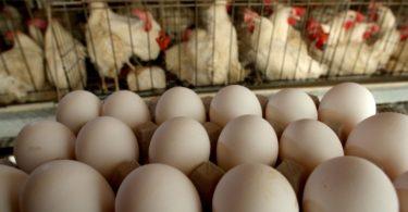 eggs_de1