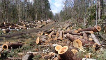 Pădurile României