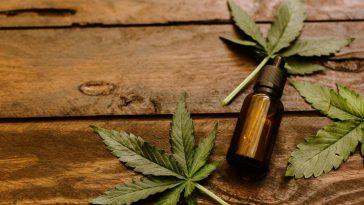 legalizarea canabisului medicinal