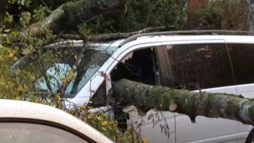 Furtuni devastatoare în Germania. Copaci doborâți, mașini și clădiri avariate